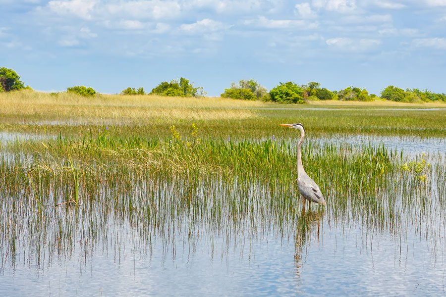 Home Builders Applaud EPA Announcement to Improve Florida Wetlands Permitting Process. Florida wetlands from an airboat ride at Everglades National Park in Florida. Photo credit ShutterStock.com, licensed.