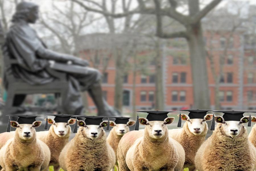 Flock of Future Leaders