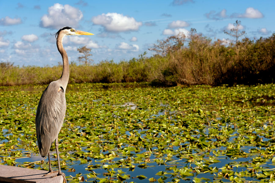 Experience the Everglades, explore a magical underwater world, study fossils, butterflies, or tropical flowers, or just relax in the parks and beaches.