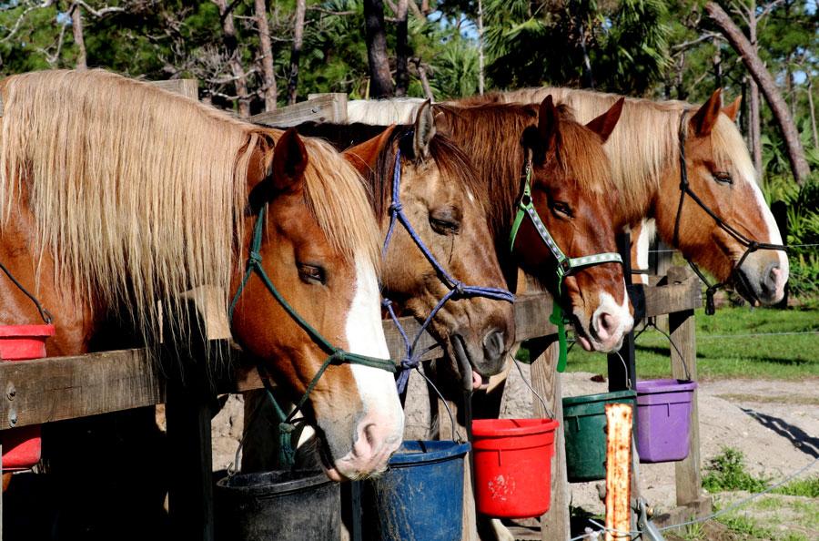 Photo credit  ShutterStock.com, licensed.