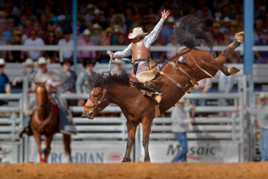A champion bronco rider hangs on his horse at the famous 84th All-Florida Championship Rodeo on March 9, 2012 in Arcadia, Florida. Editorial credit: jo Crebbin / Shutterstock.com, licensed.