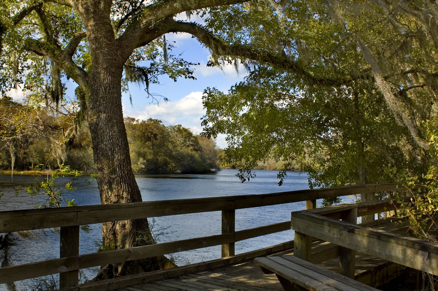The peaceful boardwalk on the Suwannee River. Photo credit ShutterStock.com, licensed.