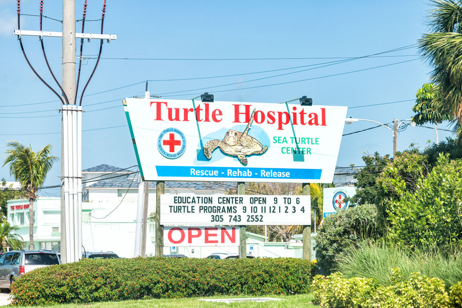 Turtle Hospital clinic for wildlife on The Overseas Highway, Route US1 in the Florida Keys.