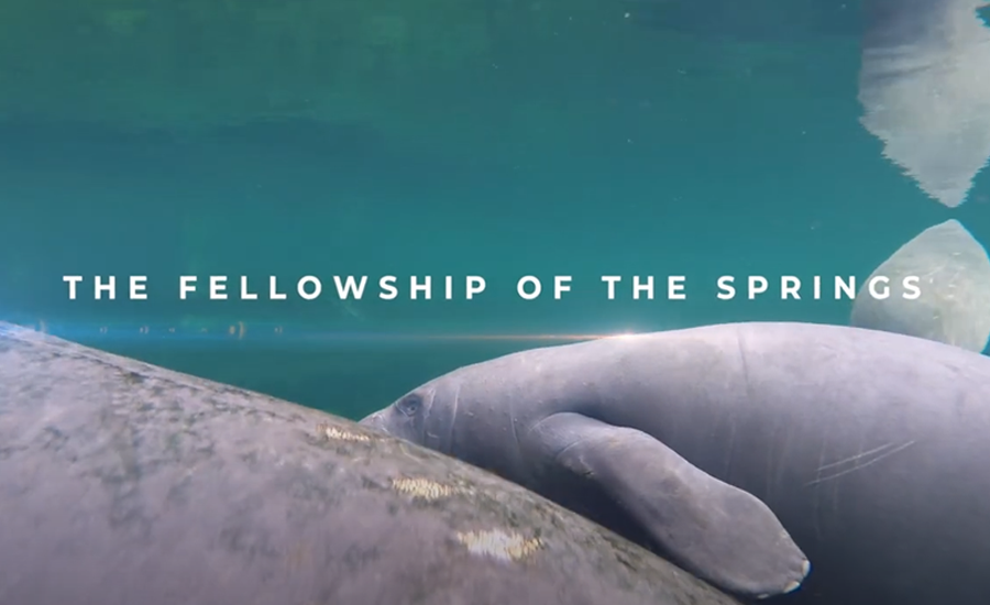 The Fellowship of the Springs is a two-part, two hour documentary series by director/producer Oscar Corral and Explica Media. The two episodes of the film take viewers into the wonder and beauty of Florida's unique but troubled springs.