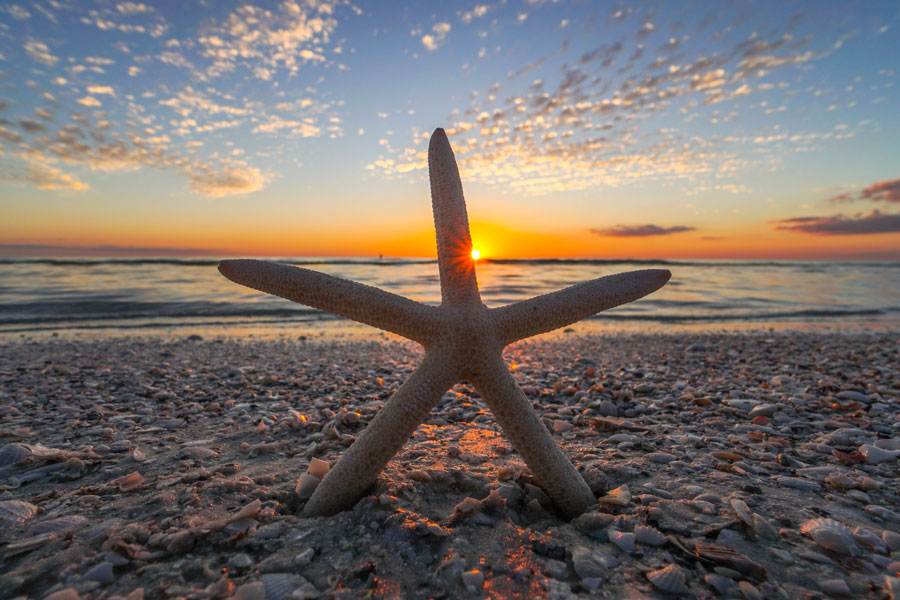 A starfish and sunset on Marco Island, Florida. P