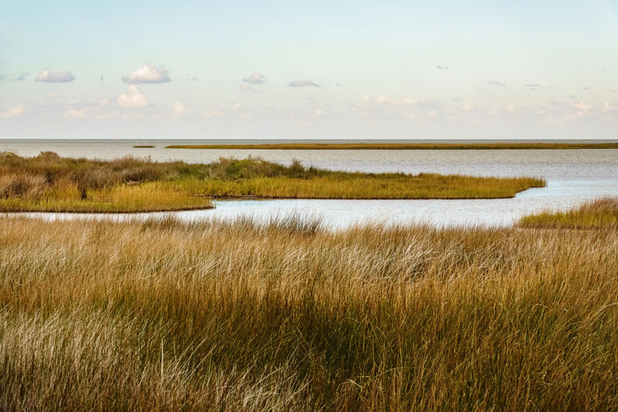 Million-Acre Southeast Salt Marsh Conservation Plan Gets Green Light
