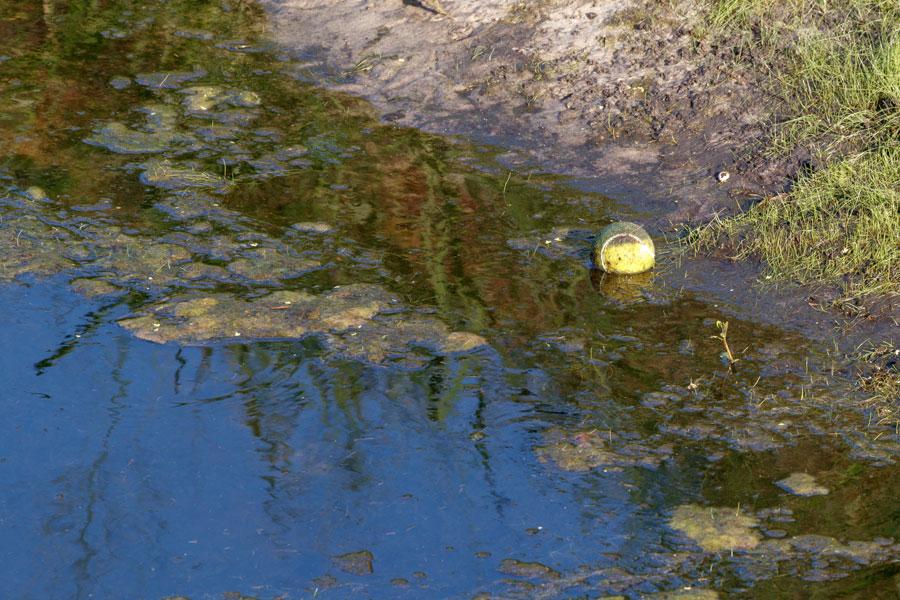 As Toxic Algae, Other Issues Bloom, FL Environmental Secretary Resigns