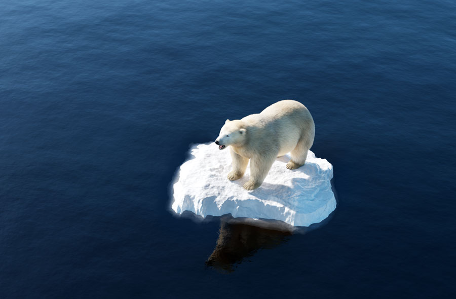 ntrary to environmentalists, the polar bear population (which they claim are an endangered species today due to global warming) has actually increased from around 5,000 in the 1960's to over 25,000 today. Photo credit ShutterStock.com, licensed.
