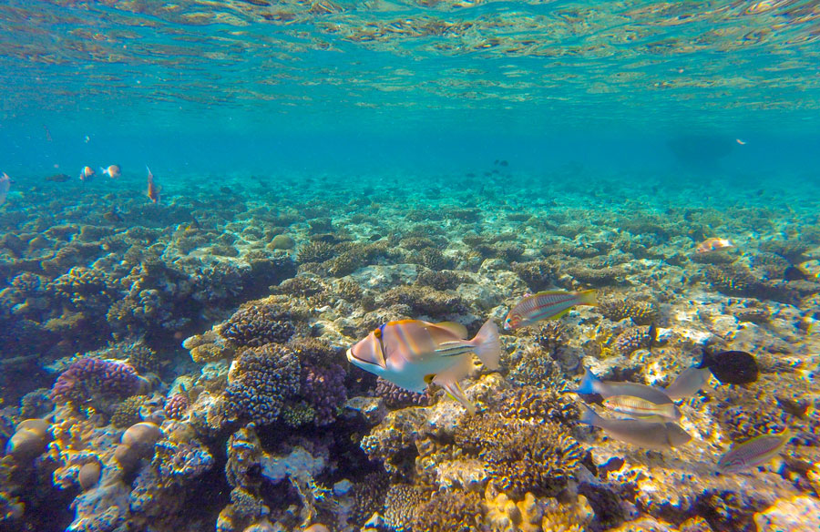 Red Sea's Coral Reef