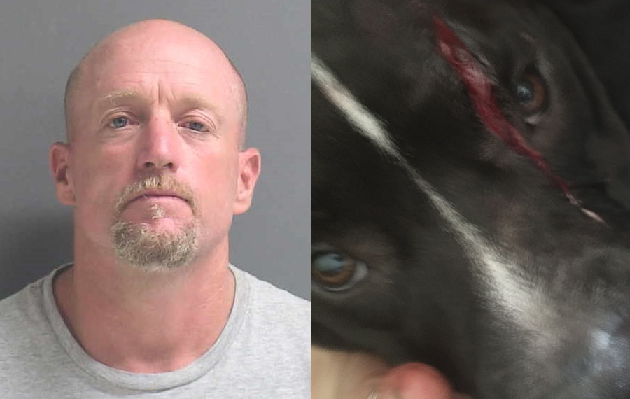 According to authorities, Richard K. Nelson, 46, was arrested Friday on a felony charge of animal cruelty after he used a machete to slash a dog several times. He was additionally charged with providing false information to a law enforcement officer after video surveillance disproved his claim that he was defending himself.
