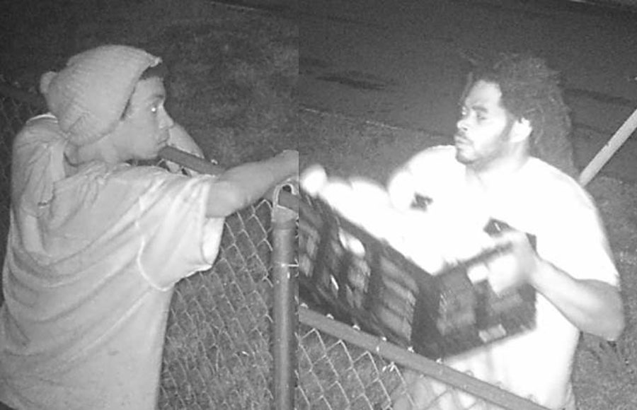 According to authorities, the suspects were captured on surveillance video climbing the fence to a mango grove and helping themselves to over $1,000 worth of mangos.